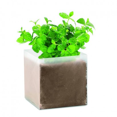 Bag with mint seeds